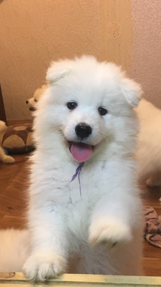Корм для собак Royal Canin (большие мешки) - купить